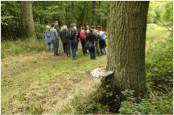 Fungi for Forest Ecologists, Wytham Woods, Oxford. (c) Martha Crockatt