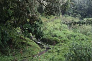On the way up Kilimanjaro.