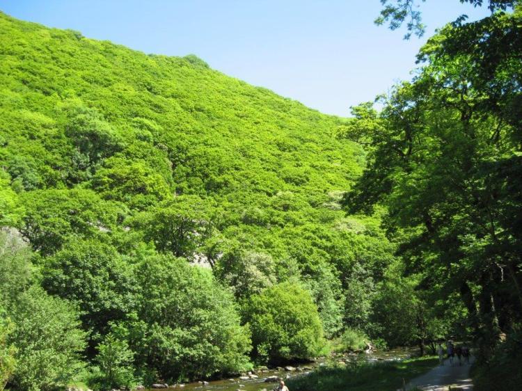 Watersmeet in Exmoor, Devon. This National Trust site is home to six species of Sorbus.