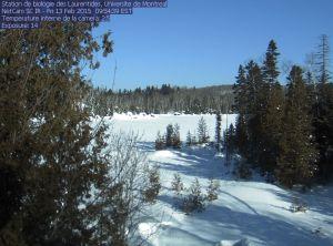 Webcam capture, Laurentians field biology station, Université de Montréal.