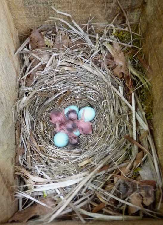 Egg hatching dates are used as a measure of the birds timing of breeding. (c) Malcolm Burgess