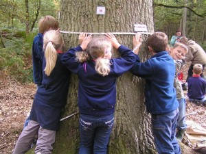 The Sylva Foundation is a leading forest education charity. Photo credit: Euan and Madeleine.