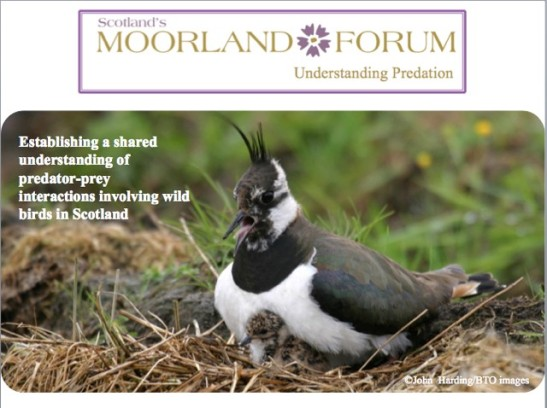 UP Postcard - Lapwing.jpg